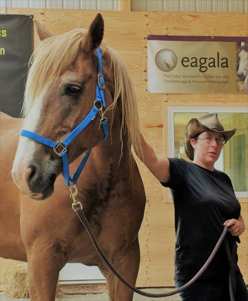 natural horsemanship clinics