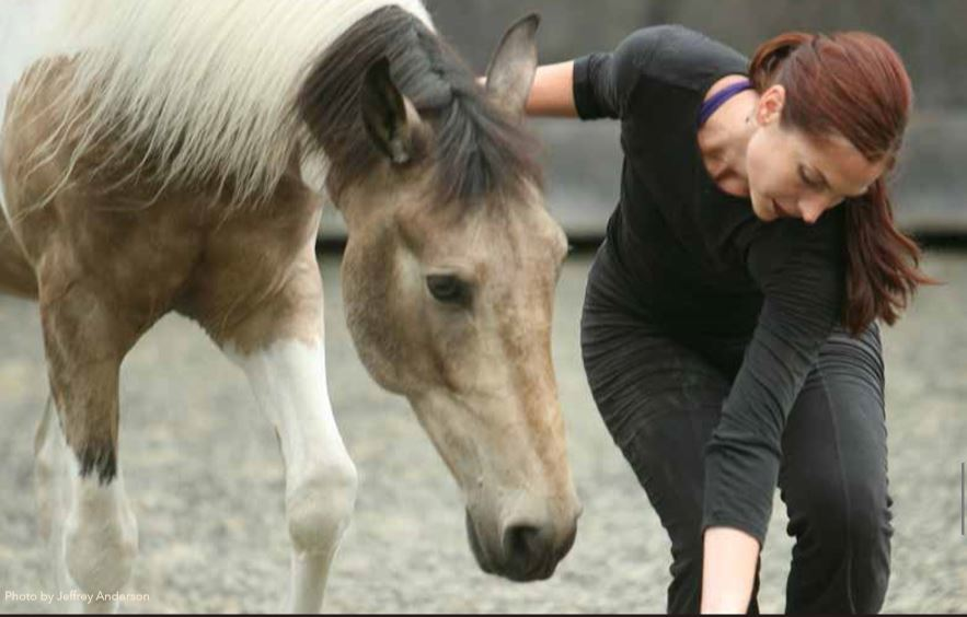 Paula Josa-Jones horse clinic - conscious movement and touch